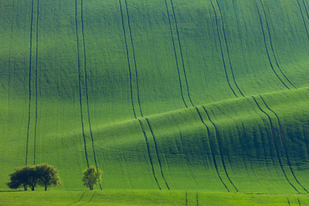 Trees against rolling hills